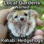 Local gardens wanted for hedgehog release